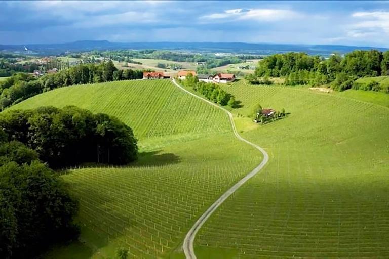 Weingarten-2021-06-11-09-29-38-5